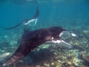 Khao Lak Snorkeling trip