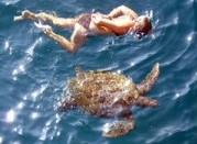 similans_turtle3